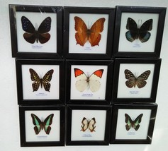 Rare Real 9 Butterfly Insect Display Taxidermy in Wood Framed Collectibl... - $90.00