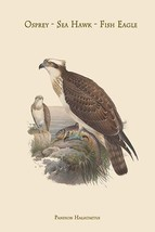 Pandion Haliataetus - Osprey - Sea Hawk - Fish Eagle by John Gould - Art... - $19.99+