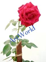 Digital download,Rose Flower,Photography,Poster,Backdrop,Background,Gard... - $2.00