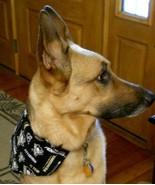 Dog Bandana LOT Pittsburgh Penguin/Steelers & Heart/Shamrock Reversible ... - $19.71