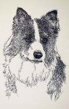 Border Collie Dog Art Portrait Word Drawing #46 Kline adds your dogs nam... - $49.95