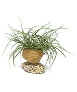 Air Plant Beach Shell House Plant Gift Planter Clam Scallop Rhinestones ... - £6.19 GBP