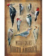 """Backyard Woodpeckers of North America 12"""" x 18"""" Wood Sign by Susan Bourdet - $39.95"""