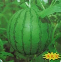 BEST PRICE 10 Grams Seeds Green Sweet Watermelon ,DIY Watermelon Seeds E... - $34.00
