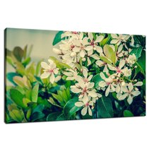 An item in the Art category: Indian Hawthorn Shrub in Bloom Colorized Fine Art Canvas & Wall Art Prints