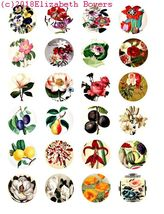 flowers fruit art collage sheet 1.5 inch circles clip art digital downlo... - $2.50