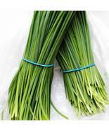 1000+ GARLIC CHIVE seeds; Broad Leaved NIRA; Allium tuberosum - $15.00