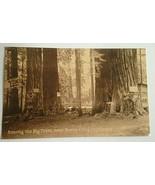 VINTAGE POSTCARD AMONG THE BIG TREES  SANTA CRUZ CALIFORNIA F56 - $11.63
