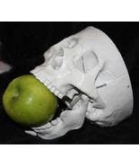 Life Size Bucky HUMAN SKELETON SKULL Halloween Party Horror Prop Decorat... - $39.17