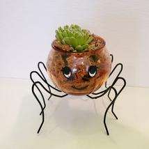 Spider Planter with Succulent, Halloween Pot, Sempervivum, Hens and Chicks image 5