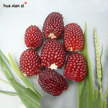 15 Pcs Zea Mays Vegetable Seed, HZ Delicious Vegetable Seeds - $7.13