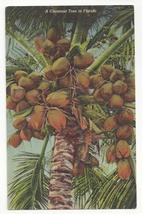Cocoanut Tree in Florida GW Romer Tropical Florida Series Linen Coconut ... - $3.95