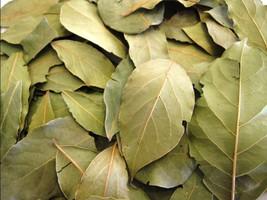 Pimento Leaves 250 Fresh Organic Tropical leaves - $23.38