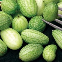 50 Seeds of Mexican Sour Gherkin Cucumbers - $25.84