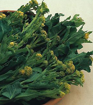 120pcs Very Healthy Broccoli-Early White Sprouting Green Vegetable Seeds IMA1 - $13.99