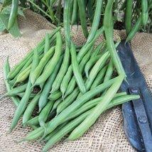25 lbs Seeds of Crockett Bean - $468.77