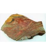 Petrified Wood 2 Specimen Slab Cabbing Rough - $4.60