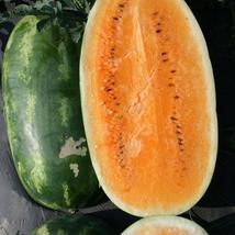 Tendersweet Orange Watermelon Seeds - NON-GMO 50SEEDS  - $11.99