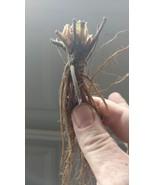 Hand_picked_nursery Plant sample item