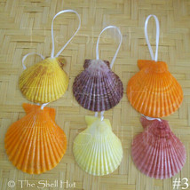 Seashell Scallops Christmas Ornaments Drilled Shell Natural Beach House ... - $12.50