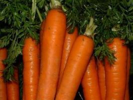 4 Variety Seeds - Danvers 126 Carrot Vegetable Seeds #IMA41 - $12.99+