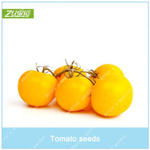 100pcs Easy Grow Delicious Organic Tomato Seeds Bonsai Nutritive Extra-t... - $2.20