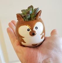 "Ceramic Animal Planter & Live Succulent 2"" Kangaroo Pot Echeveria Green Burgundy image 7"