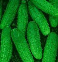 70 Seeds of Cucumber Nezhinskiy Dar - $18.93