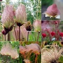 Neue nette entzückende Blumen wohlriechende Blüte gestreifte ElR8 - $2.00