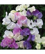 SWEET PEA VERBENA FRAGRANCE OIL - 4 OZ - FOR CANDLE & SOAP MAKING BY VIR... - $9.46