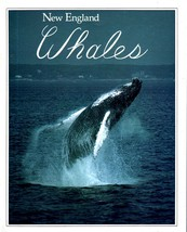 New England Whales   (BooK) - $8.95