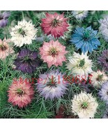 100 pcs Clematis seed,vine perennial climbing easy grow flower clematis plant FS - $5.45