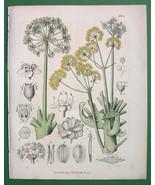 GOD'S FOOD Plant Flower - 1858 H/C Botanical Color Antique Print - $16.83