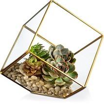 KooK Glass Square Terrarium, Succulent Plants, Votive Candles - $37.99