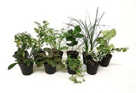 10 Assorted Live Plants with FREE Shipping!!! - $19.99