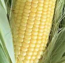 Delicious Vegetable Seeds 5 Variety Golden Beauty Corn #IMA33 - $13.50+