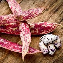 Bean, Christmas, Lima, Heirloom, Organic, 500+ Seeds, Buttery Decorative... - $19.99