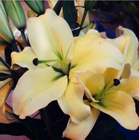 HAPPY FLOWER 2 Bulbs TLOGOWARU True Lily Bulbs Perfume Flower High germination
