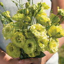 Rosanne Green Pelleted Lisianthus Seed  / Lisianthus Flower Seeds - $21.00