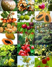 FRUIT TREE MIX sweet edible plant tree fragrant TROPICAL fruit seed -15 seeds - $12.25