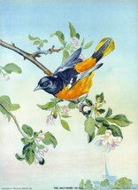 9481.Decoration Poster.Room Wall art.Home decor.Nature.Baltimore Oriole ... - $11.29+