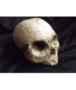 Human Half Skull Ancient Decrepit Bone Statue Decayed Rotted Prop Macabr... - $29.99