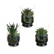 CC Home Furnishings 3 Southwestern Artificial Cactus Succulent Terrarium... - $53.20