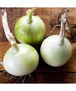 Non-GMO Crystal Wax Onion - 175 Seeds - $7.99