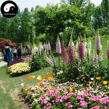Buy Digitalis Purpurea Flower Seeds 100pcs Plant Flower Digitalis Purpurea - $5.99