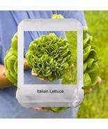 100 Italian Lettuce Seeds Vegetable Easy Grow Salad Professional Home Ga... - $3.32