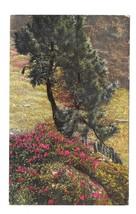 Alpen Flora Alpine Flowers Rhododendron Nenke Ostermaier Photochrome Pos... - $5.75