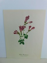 VTG Rock Penstemon  (Penstemon Rupicola)  9x12 Frameable Print Nature Fl... - $11.75