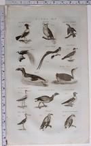 1786 ORIGINAL PRINT BIRDS PENGUIN DIVER BRENT GOOSE SPARROW OUZELL HORN OWL - $121.31