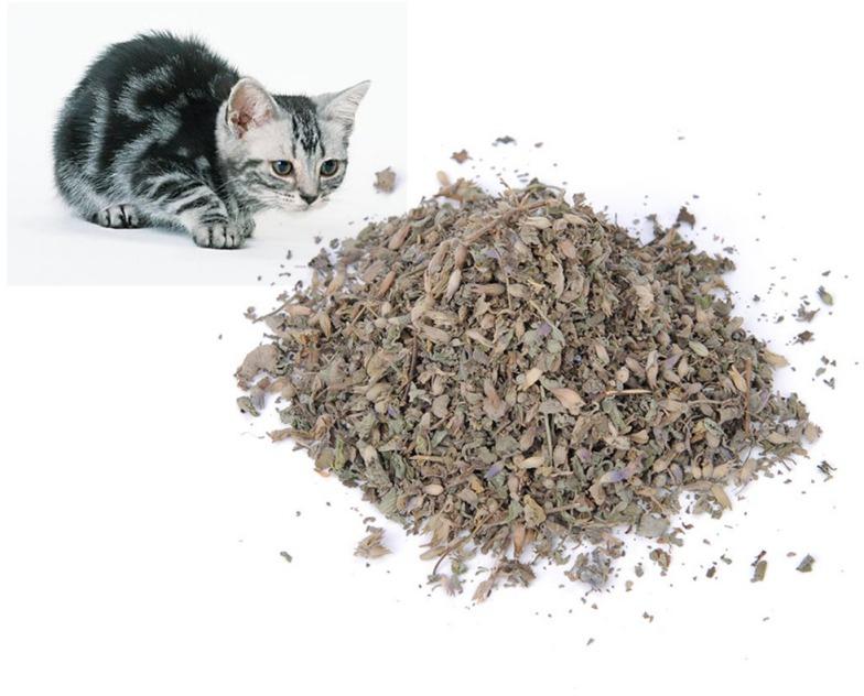 40ml Fresh Organic Dried Cat Catnip Nepeta cataria Leaf Flower